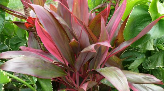 Environmental Plant Id Lab Plant List